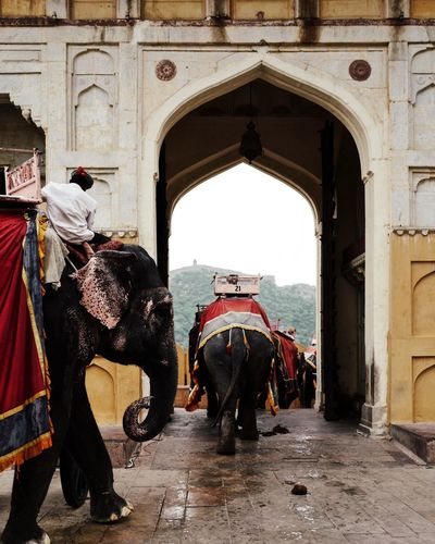 India Travel Photography Traveling Travelling Amer Fort Arch Architecture Building Exterior Built Structure Day Domestic Animals Elephant Elephants Fort History Incidental People Incredible India Mammal Outdoors Rajasthan Real People Travel Travel Destinations Vertebrate Working Animal
