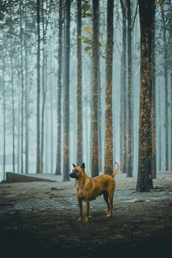 Dog standing in a forest