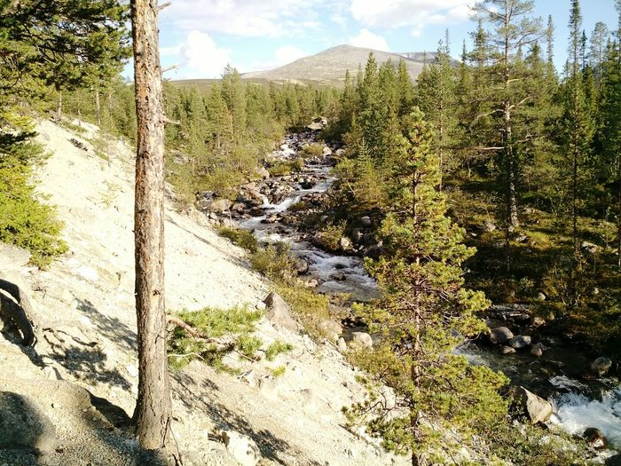 Russia Forest Mountain Beauty In Nature Tourism Lapland Green Color