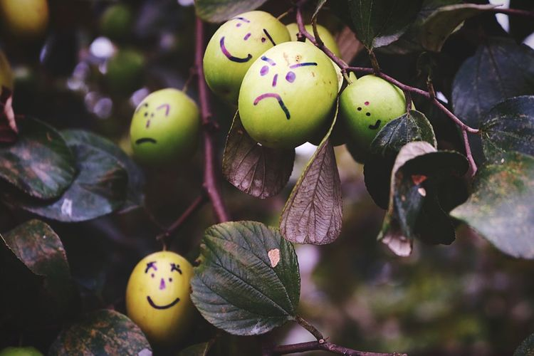 My farm Monkey Apple Plant Fruit Farmlife Tree Nature Beauty In Nature Nature Photography Naturelovers Green Color