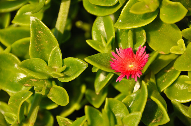 High angle view of water on flowering plant