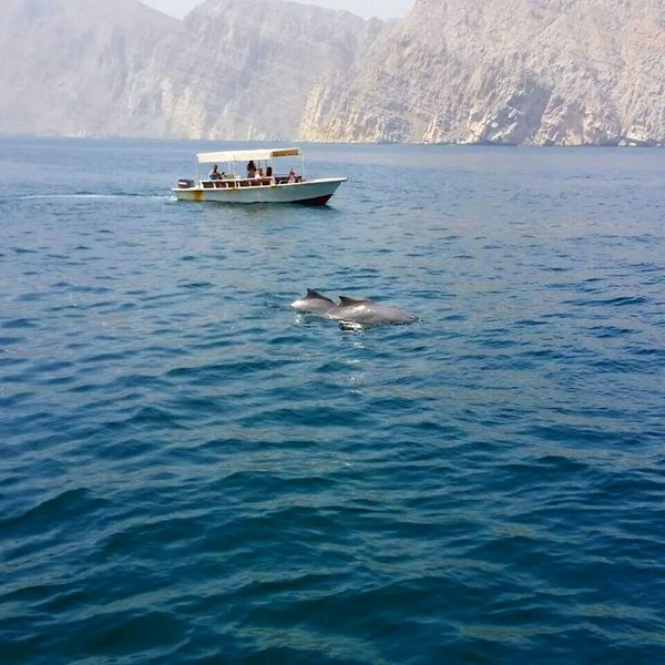 Dhowcruise Oman Khasab Mussandam