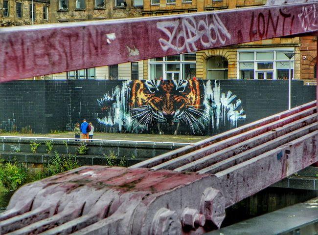 View From A Bridge Big Cat Tiger Mural Art Graffiti Walkabout