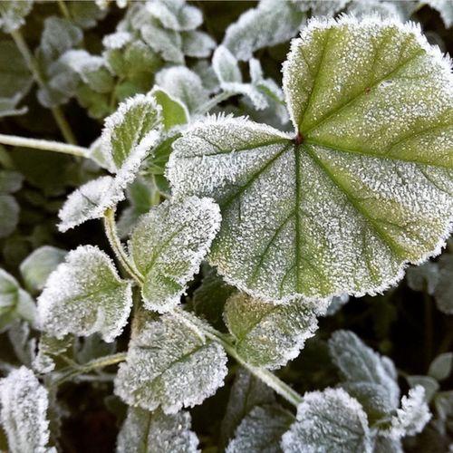 Frosty Morning Farmersville,Ca
