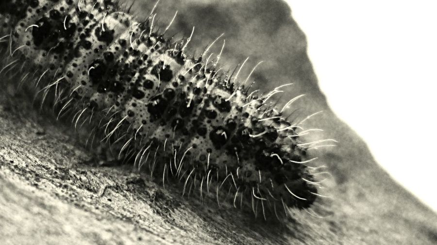 Bw_collection Macro_collection Macroclique EyeEm Nature Lover