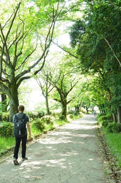 新緑~✨😆 新緑 Japan Scenery Japan Photography EyeEm Nature Lover Nikon_photography