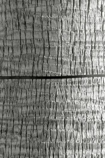 TreePorn Palm Texture Fullframe Blackandwhite Photography Abstract Minimalism