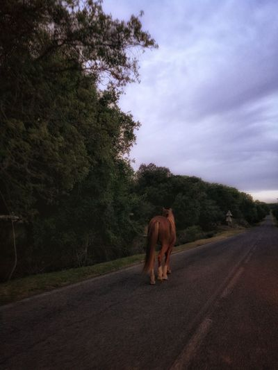 One Animal Animal Themes Animal Road Tree Sky Domestic Animals Nature Capture The Moment Sardinia,italy Nature Horse Photography  Animals🐾 Horse Photography  Agriculture Horses