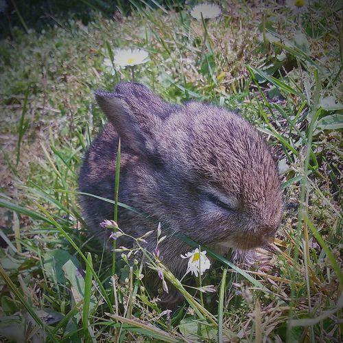 Baby Rabbit Baby Rabbits Everyday Joy Enjoying Nature Eyeem Nature Lover. Open Edit. Taking Photos.