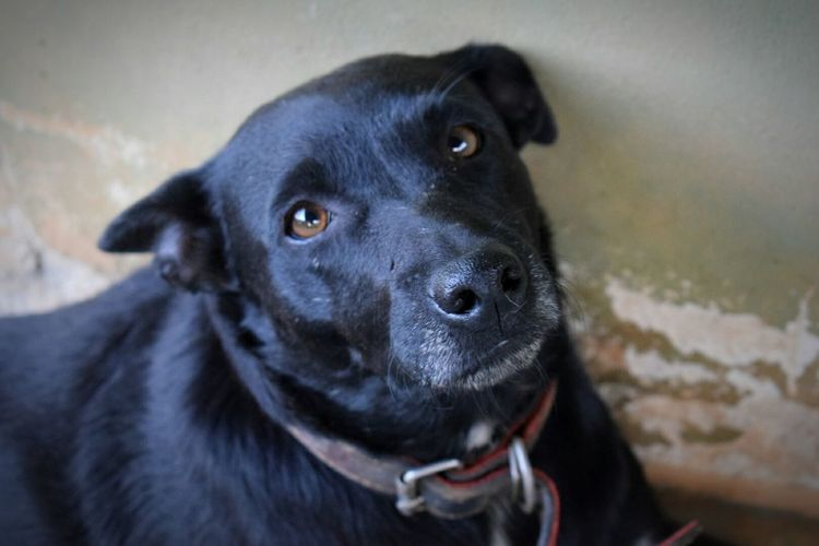 Dog Pets Domestic Animals Animal Themes Looking At Camera Pet Portraits