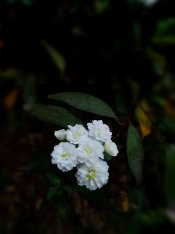 The Week On EyeEm Flower White Color Fragility Nature Growth Close-up No People Freshness Beauty In Nature Flower Head Day Leaf Outdoors Springtime