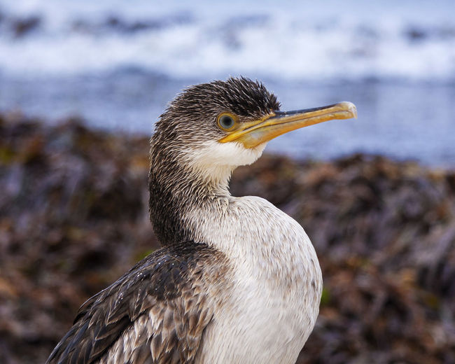 Great cormorant Menorca Bird One Animal Animals In The Wild Animal Themes Animal Animal Wildlife Vertebrate Focus On Foreground Close-up Beak No People Looking Day Water Nature Side View Looking Away Cormorant  Outdoors Profile View