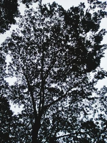 Tree Beauty In Nature Low Angle View Growth Day Branch Outdoors Sky No People Nature