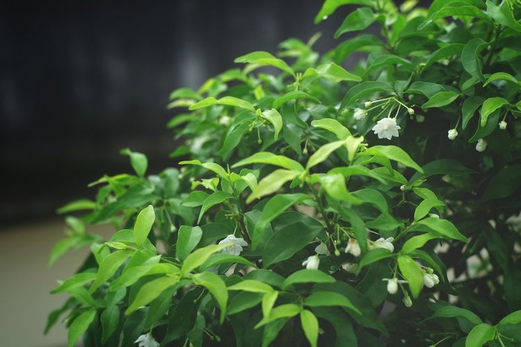 Close-up of fresh green plant