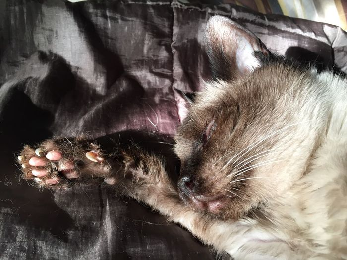Cat Cats Cats Of EyeEm Cats 🐱 Catlovers Chat Chats Rêve Sleeping Sleep Sleeping Cat Dormir Mimetism Magnetic Princess Relaxing Relaxing Moments Peace And Quiet Rêver Pet Catcute Colors Mycat Sweet Sweet Dreams Mix Yourself A Good Time