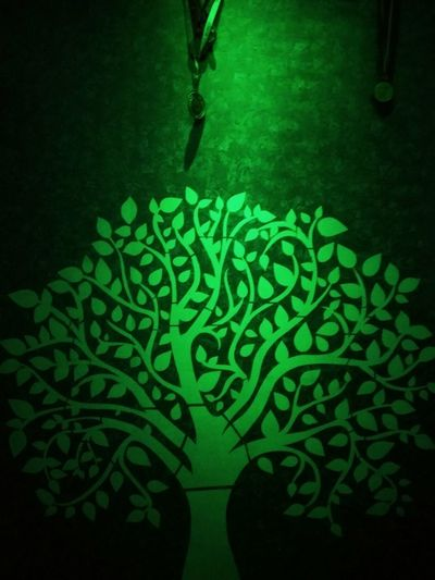 Green Color No People Leaf Outdoors Water Day Nature Treeoftheday Tree Trunk Treeoflight Treeofwishes Treeoflove Treeofinstagram Tree Branches If Trees Could Speak