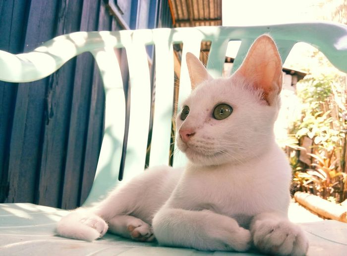 Chilling Cat Hanging Out Relaxing Vscocam Vscophile Hello World Cat Lovers Eyeem Philippines Home Sweet Home Afternoon