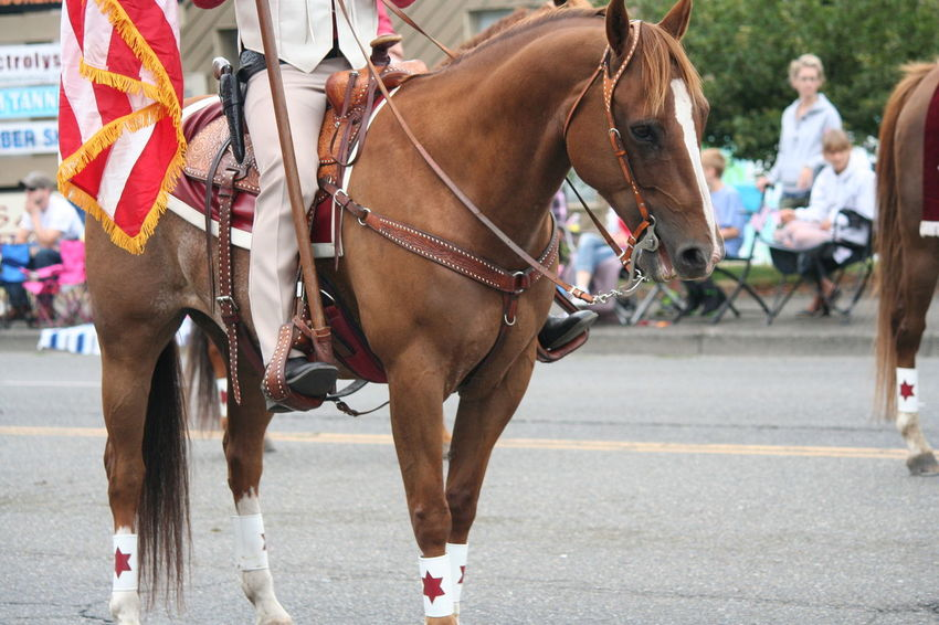 4th Of July 2016 4th Of July Parade Bridle Celebration Close-up Day Domestic Animals Focus On Foreground Herbivorous Horse Horses Livestock Mammal Outdoors Parade Working Animal