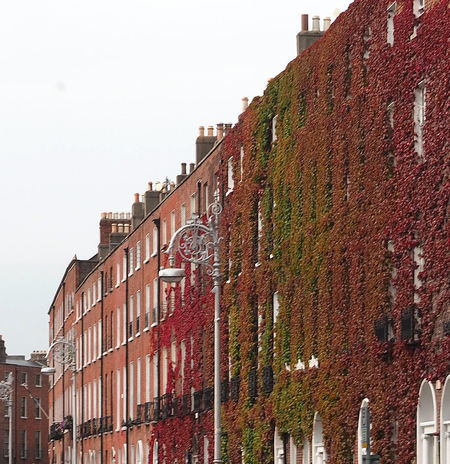 Architecture City Sky Red Window Day Outdoors Clear Sky No People Lampost Dublin City Low Angle View Building Exterior Built Structure Ivy On Building A Taste Of Dublin Scheduled For Demolision