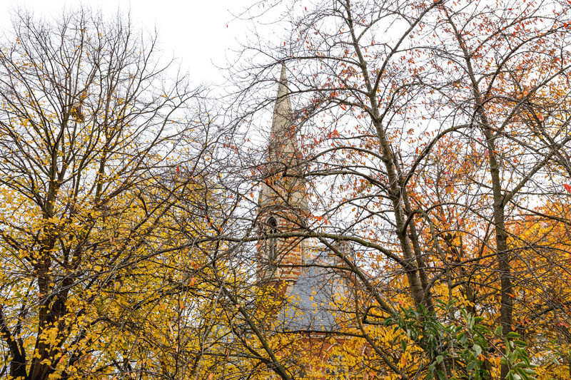 Autumn in London Tree Autumn Plant Change Low Angle View No People Branch Nature Sky Day Growth Outdoors Tranquility Beauty In Nature Bare Tree Scenics - Nature Land Forest Tranquil Scene Non-urban Scene Fall Travel Destinations Travel London Autumn colors Autumn Mood