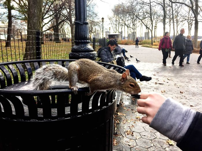 New York New York City Real People One Animal Outdoors Tree Squirrel To Feed Squirrel Autumn Colors Holiday Day People
