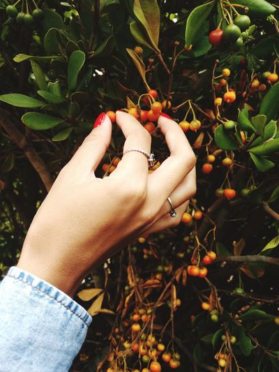 Popular Photos Beauty In Nature Nature Human Hand Women Tree Fruit Holding Picking Close-up Plant Fruit Tree