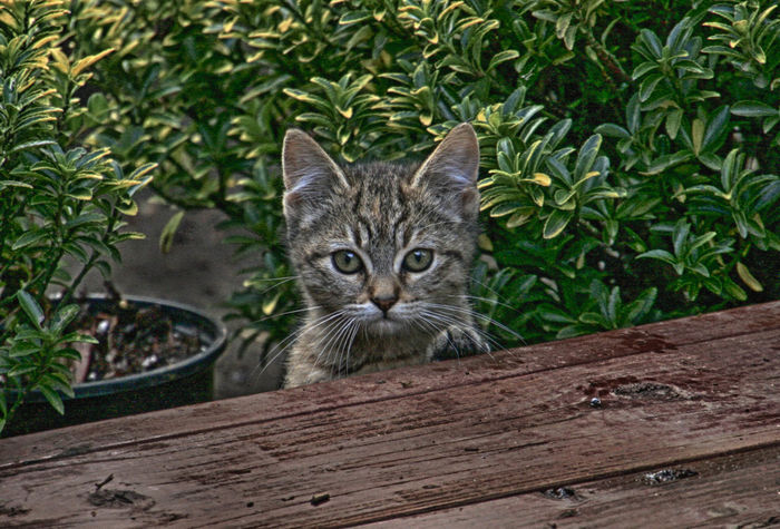 Feral Kitten Feral Cat Animal Themes Close-up Day Feline Looking At Camera Mammal Nature No People One Animal Outdoors Pets Plant Portrait Tree Whisker Wood - Material