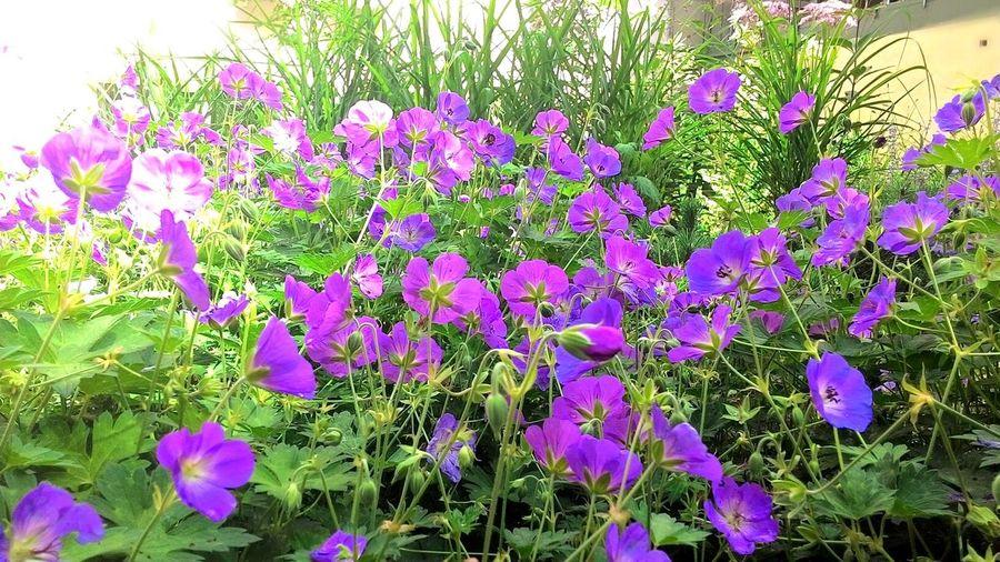 цветочки 🌼