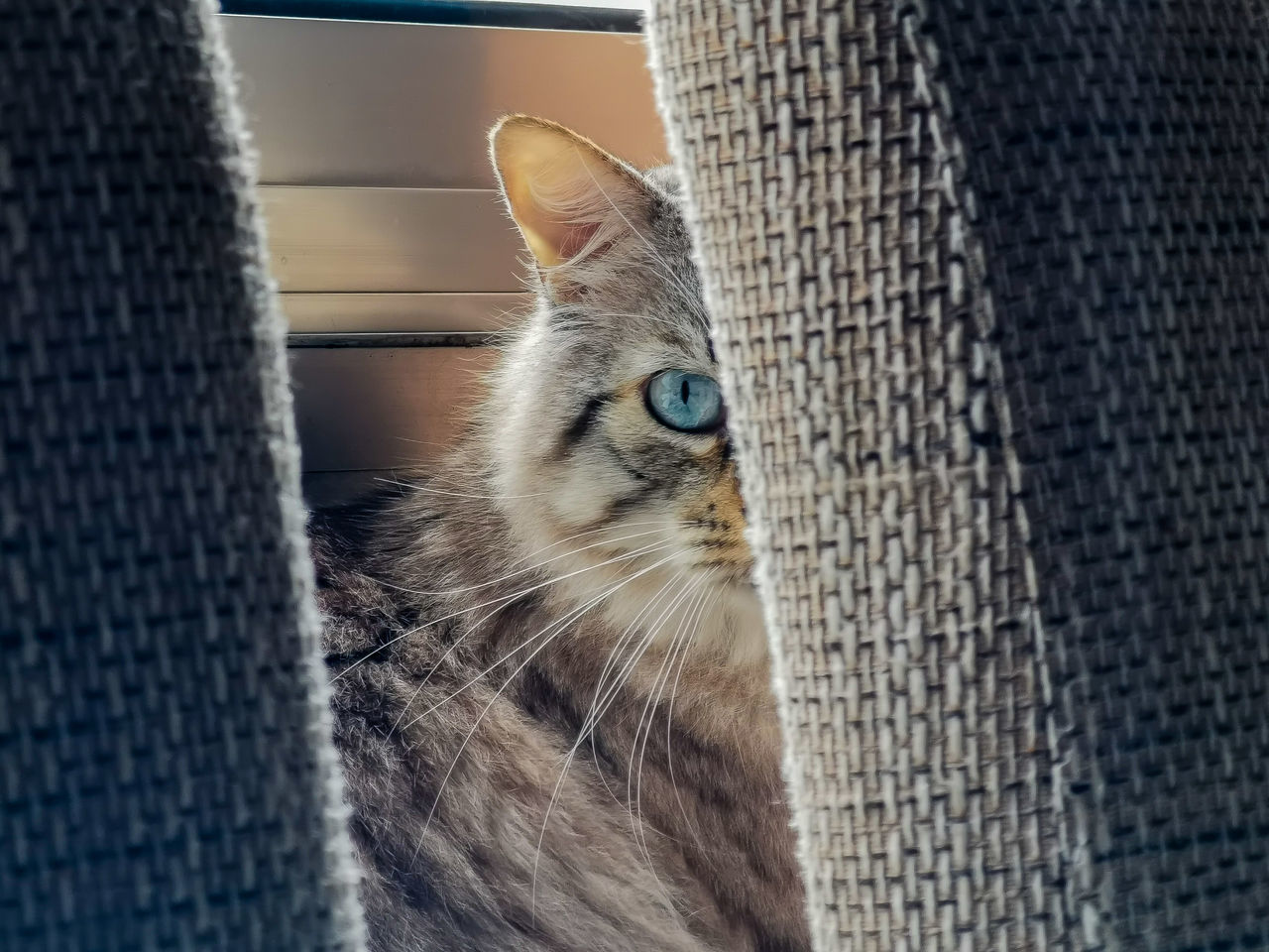 CLOSE-UP PORTRAIT OF A CAT LOOKING THROUGH WINDOW
