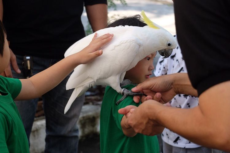 Close-up of cockatoo sitting on boy
