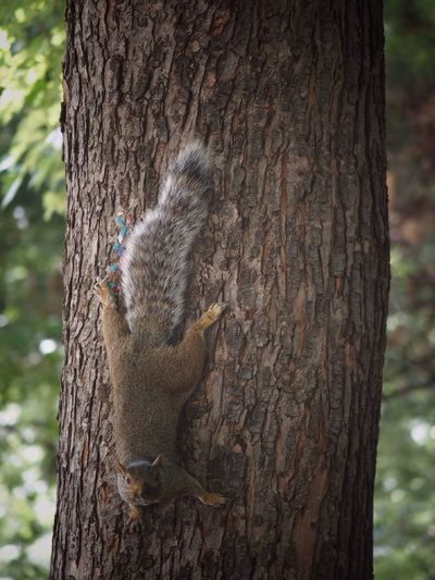 Nature Photography Views Tourism Streetphotography Montreal, Canada Placetovisit Montréaljetaime Parcs Great Atmosphere Montreal Series Squirrel Photo Squirrels Squirrel Montréal