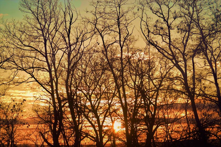 Bare Tree Beauty In Nature Branch Day Forest Nature No People Outdoors Scenics Silhouette Sky Sunset Tranquil Scene Tranquility Tree