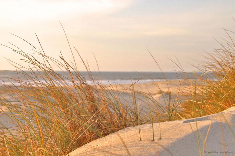 Close Up Desert Deset Dunes Horizon Over Water Ocean Ocean View Sand Sea Sun Desrt Sunny Day Zoom Desert