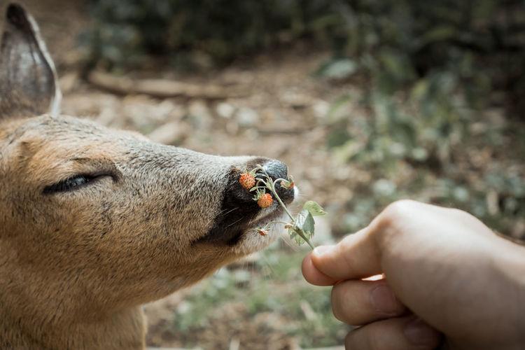 Close-up of hand feeding