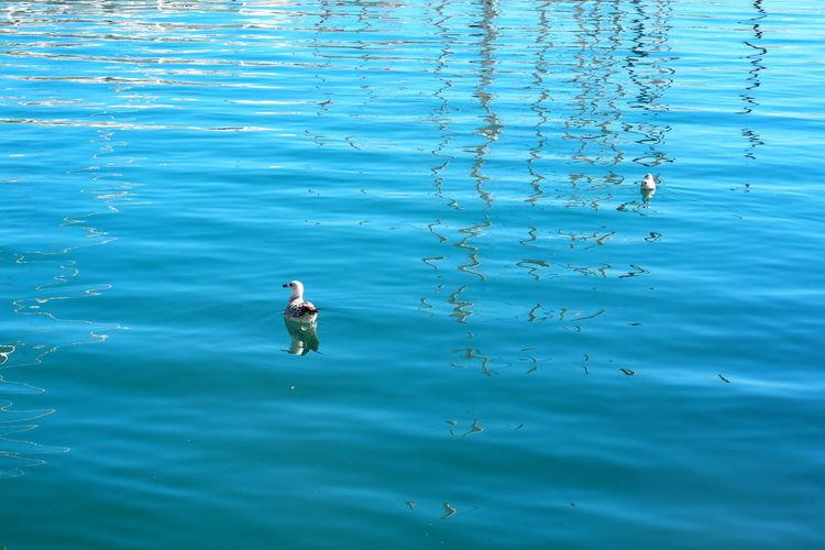 Water Animal Animal Themes Vertebrate Swimming Animal Wildlife Animals In The Wild Bird Waterfront Nature One Animal Sea Day Beauty In Nature Blue No People Water Bird Outdoors Marine