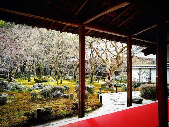 園光寺 一乗寺 京都 Kyoto Relaxing 庭園 寺社仏閣