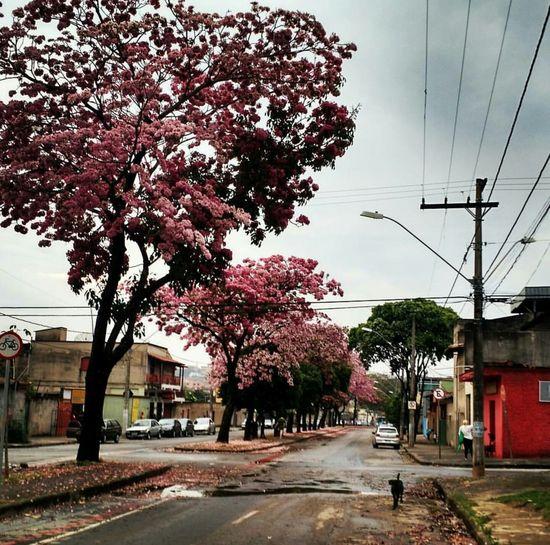 Paisagem Cidade Belo Horizonte Ypê