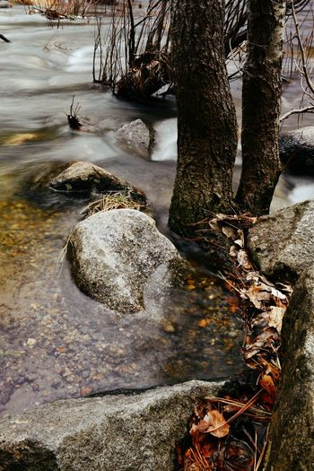 Rocks by river in forest