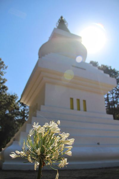 Stupa De La Paz Valle De Bravo Mexico Budist Temple At The Woods At The Forest Stupa Sacred Places Agapanthus Sunshine Sunlight White Temple