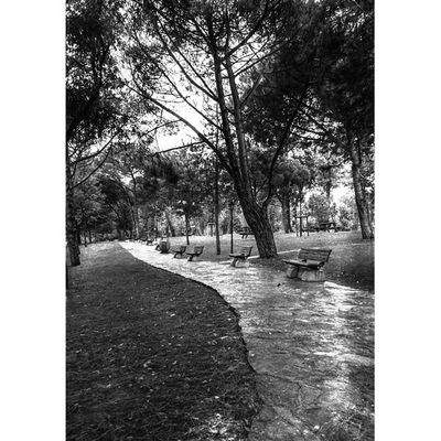"""The roots of all goodness lie in the soil of appreciation for goodness."" Dalai Lama Bnw_demand Blacknwhite_perfection Bnw_europe Bnw_photografare tinycollective tiny_collective minimal monoart_mx princely_shotz photowall_bw ig_europe ig_global_life ig_turkey icapture_bnw jj_cma_street arteobjetiva_bw graphic_arts_bnw stunning_shots street_photo_club urbanphotography outofthephone underground_level hartcollective vscocam streetbw"