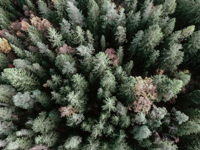 Full frame shot of fresh plants in snow
