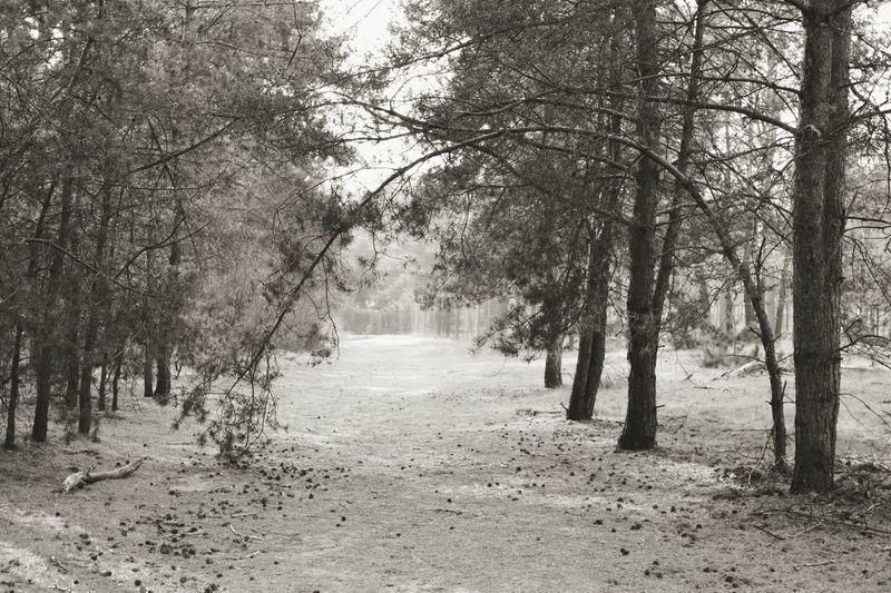Inthewoods Trees Arbres Bäume Fantastique Loveit J'aimeLaNature Naturelover