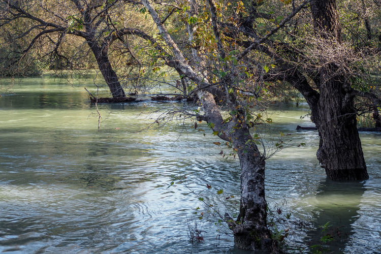 Turkey Bare Tree Beauty In Nature Branch Day Flood Lake Landscape Nature No People Outdoors Reflection Scenics Selale Sky Tranquil Scene Tranquility Tree Water Waterfall Waterfront şelalesi