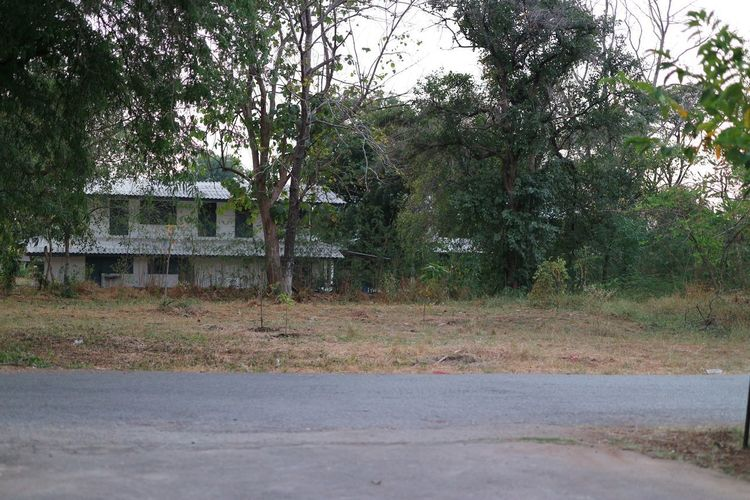 Empty road amidst trees and buildings in forest