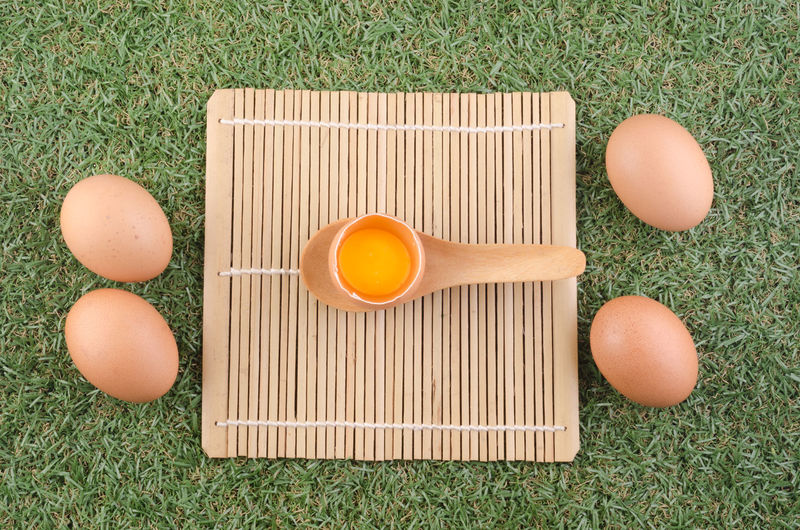 High angle view of eggs on grass