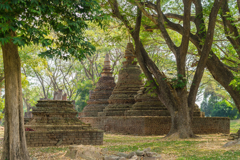 Tree Architecture Plant History The Past Religion Built Structure Ancient Belief Place Of Worship Travel Travel Destinations No People Day Nature Spirituality Tourism Outdoors Building Exterior Ancient Civilization Temple Jedi