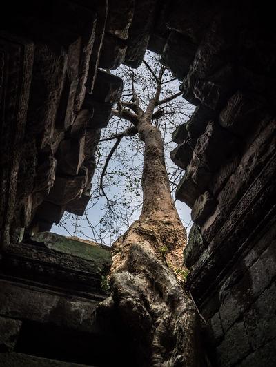 Angkor Angkor Thom Angkor Wat Beauty In Nature Cambodia Day Low Angle View Nature No People Outdoors Sky Strangler Fig Tree