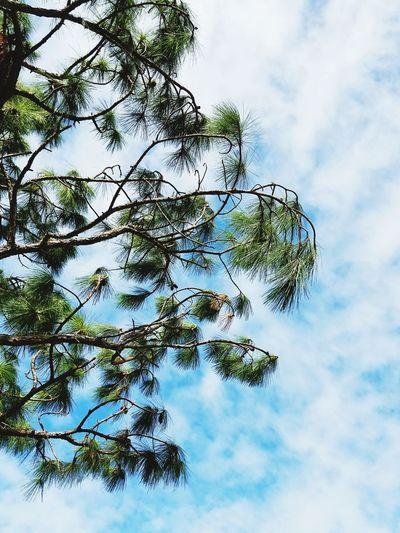 Sky Nature Low
