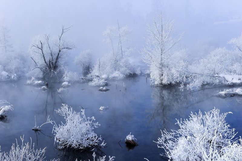 Infrared image of plants in river