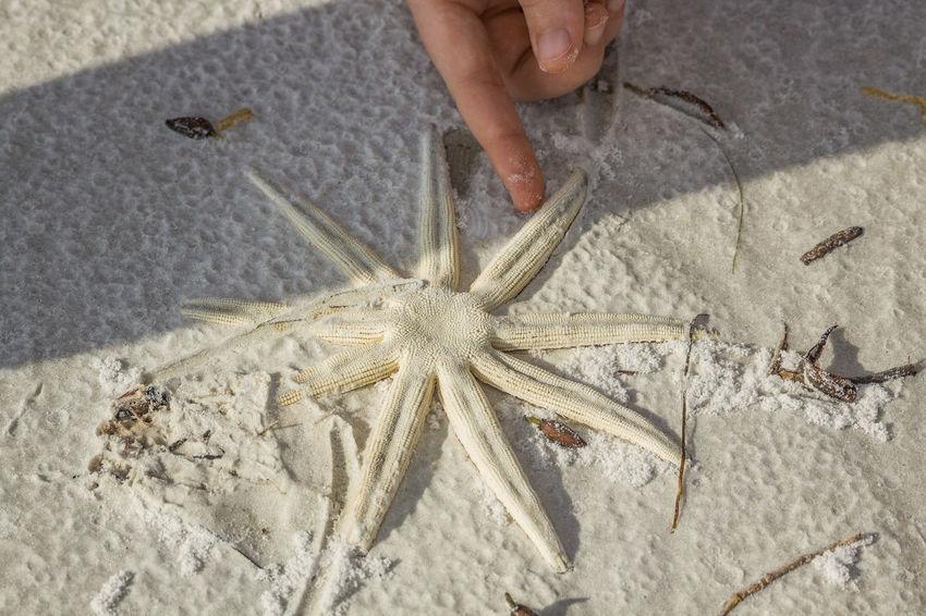 Animal Photography Animal Themes Beach Photography Day High Angle View Nature Photography Outdoors Sand Sandy Sea Life Starfish
